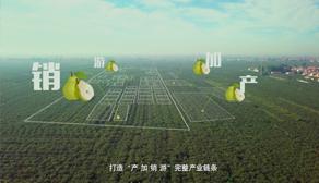 晋州鸭梨蓝鲸体育电脑版